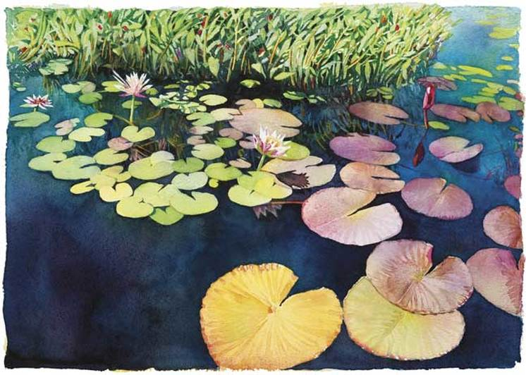 watercolor of water Lillies